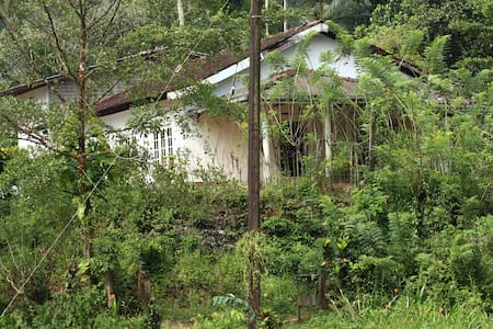 Bear Fruit bungalow on a hill