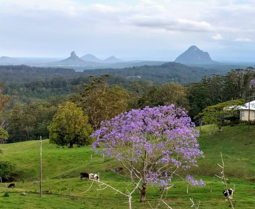 The Glass House Mountains (this is not a view from out house)