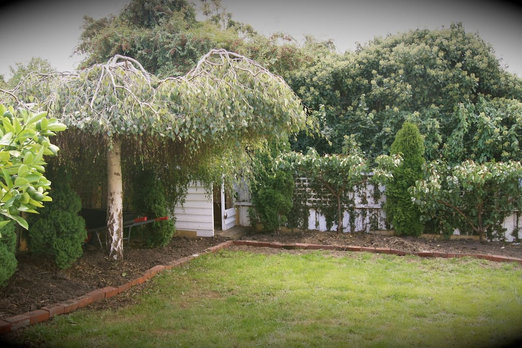 Cottage style back garden with 3 in house guinea pigs free ranging to keep the grass perfect.