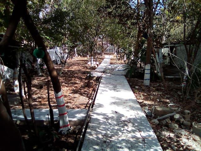 El patio trasero es de 400 metros cudradados , cuenta como se puede apreciar de varios arboles , los cuales hacen ue dicha area este muy fresca todo el tiempo , ademas que recibimos la visita de aves como loros verdes y pajaros carpintero