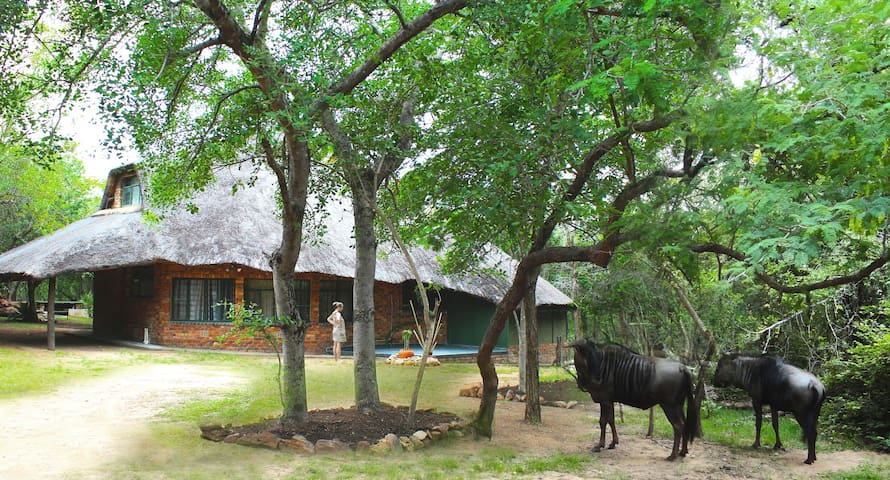 CHIMELU BUSH HUT  - Marloth Park - Huis