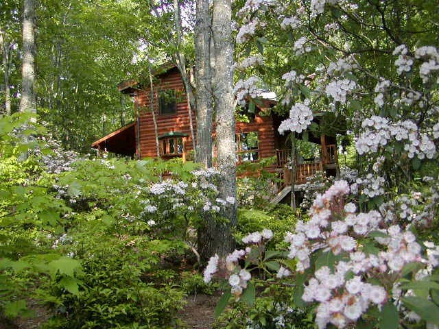 Cozy private entry apt. in a Blue Ridge Mtn cabin - Deep Gap
