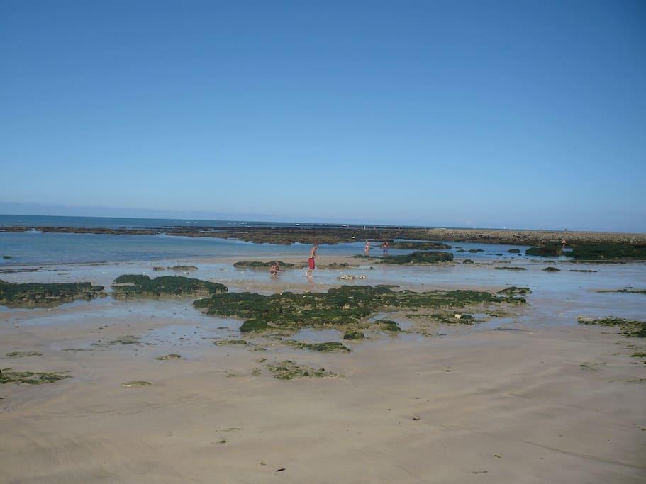 plage de domino marée basse