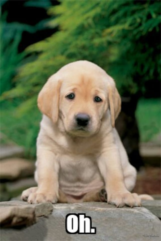 This puppy will only be happy when you are staying here :(