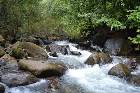 Ecoscape: Ecotourism in the Nilgiris (Std Rms) - Devala - Bed & Breakfast