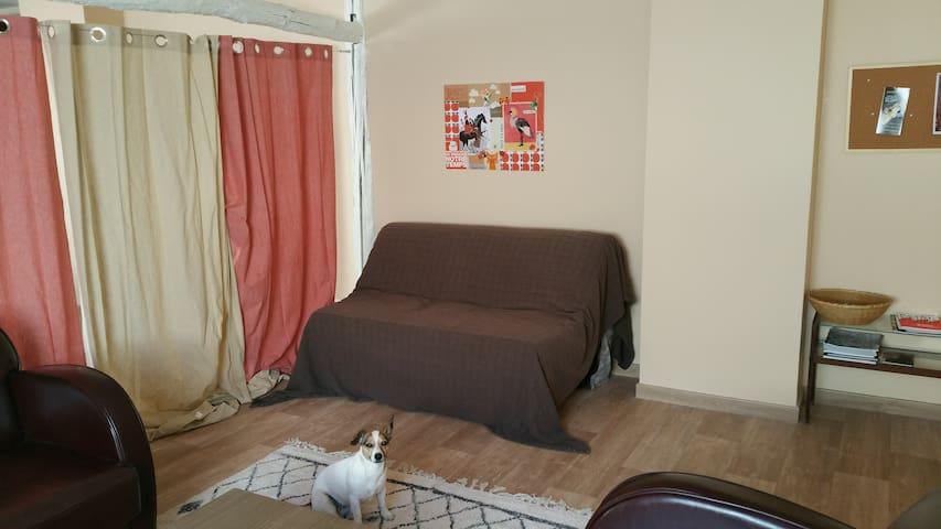 Le canapé-lit BZ dans le salon (petite chienne non comprise)