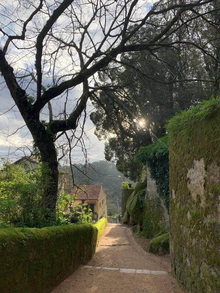 Утренняя прогулка по Синтра