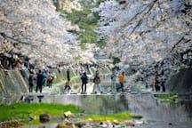 You can see beautiful SAKURA at Shukugawa in Spring. 20min by train.