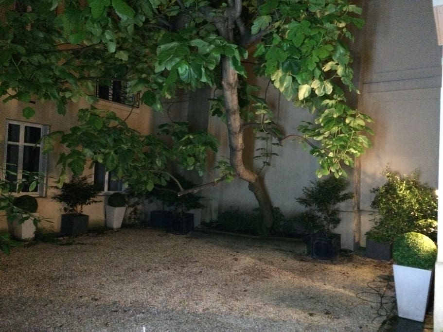 Cours arborée / Jardin