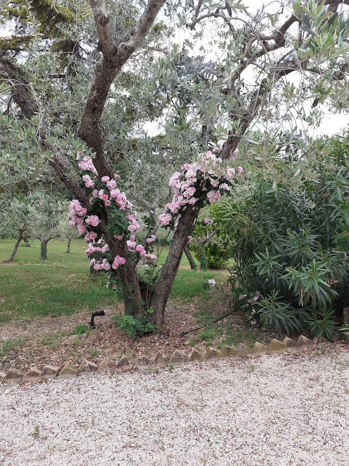 """La """"Capanna"""" tra gli olivi, una  vacanza speciale"""