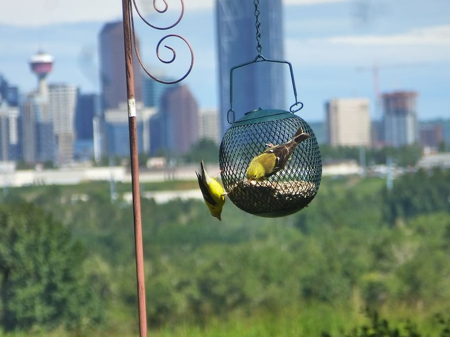 GREAT BIRDWATCHING IN THE SUMMER