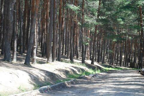 Surami - Рядом лес
