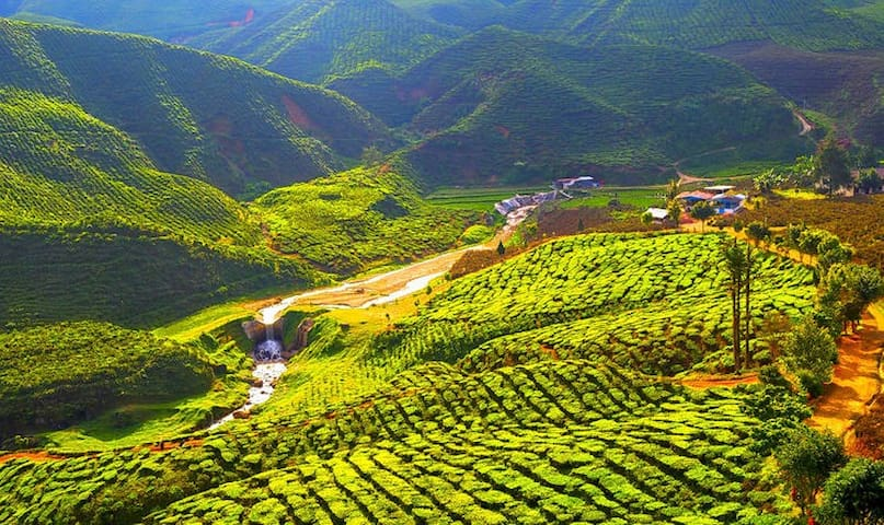 Points of interests in Cameron Highlands