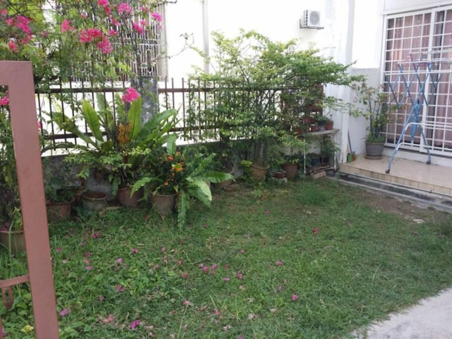 Garden (under renovation:-))