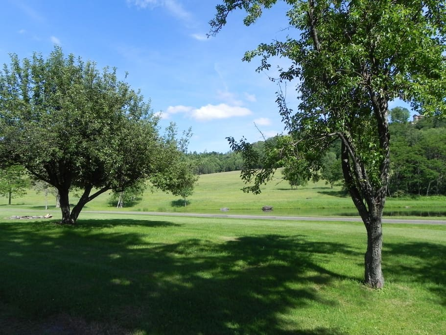 View of neighbor's pond and apple trees