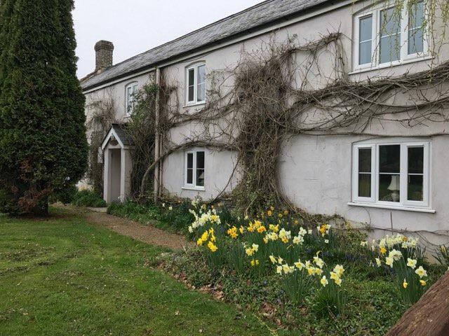 Homely cottage near Lyme regis - Dalwood