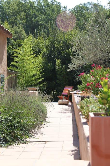 La partie Est de la terrasse, bordée de lavande