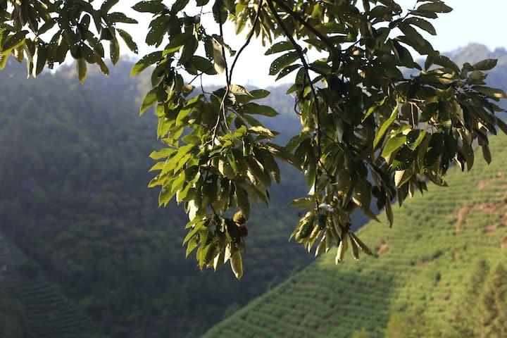 小豆山谷 |露台山景江景 |古堰画乡景区5km | 可预约接送/早餐 |秋天摘栗子