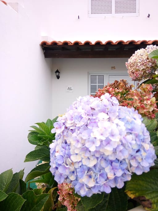 Front entrance with registered tourism rental license plate on wall and beautiful Hydrangea flower (Hortência).