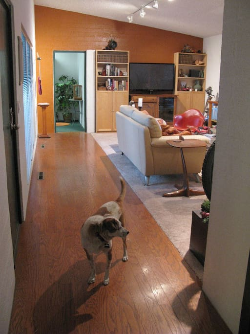 Contemporary mixed with mid-century modern decor. Light and airy. Very sweet dog!