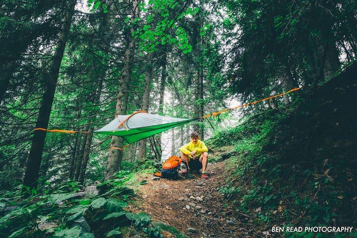 Tree Tent Glamping in Julian