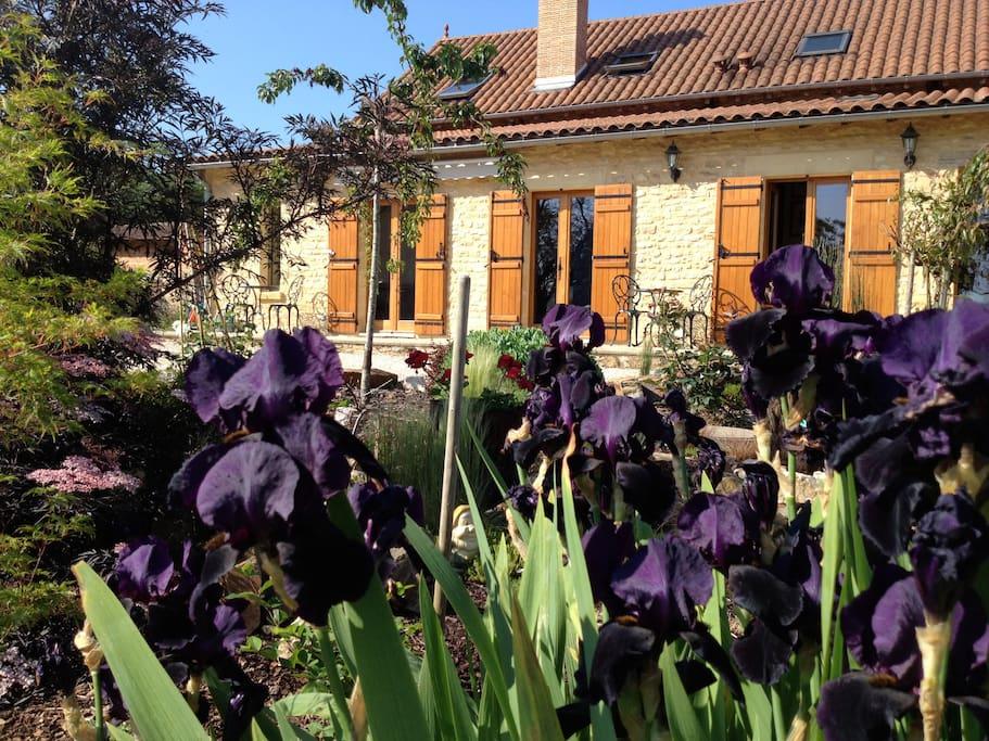 Front garden Gite Le Maine d'Autana. Iris Queen of the night