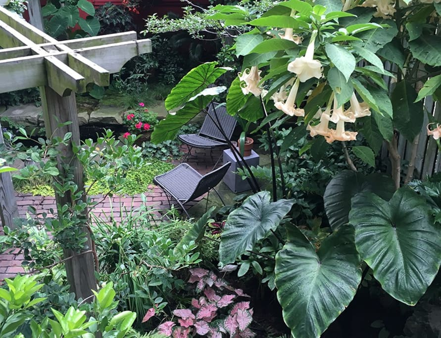 Our garden is a tropical surprise in the city.