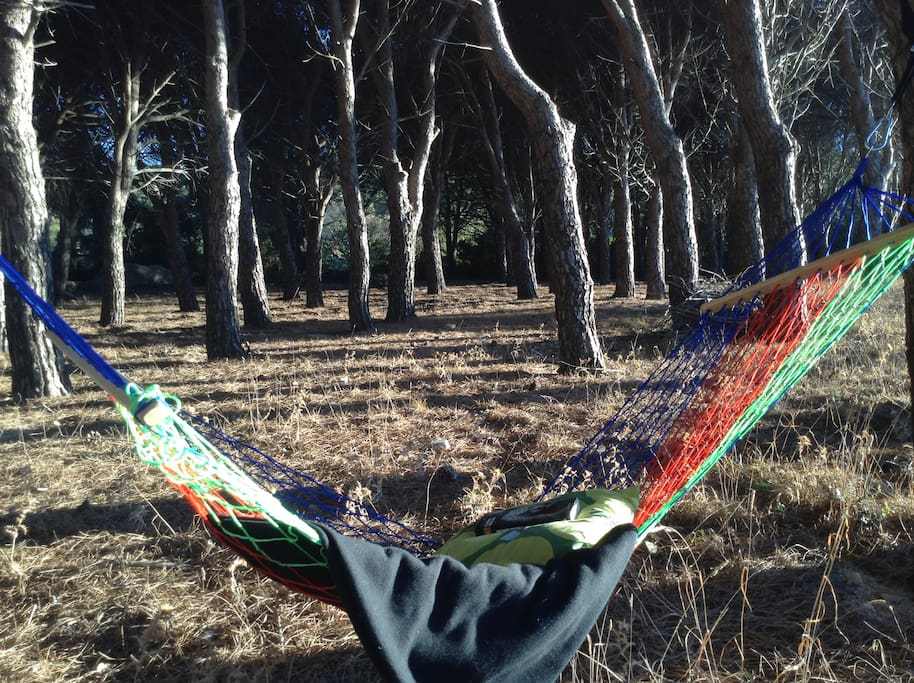 Hammock in your own private forest!