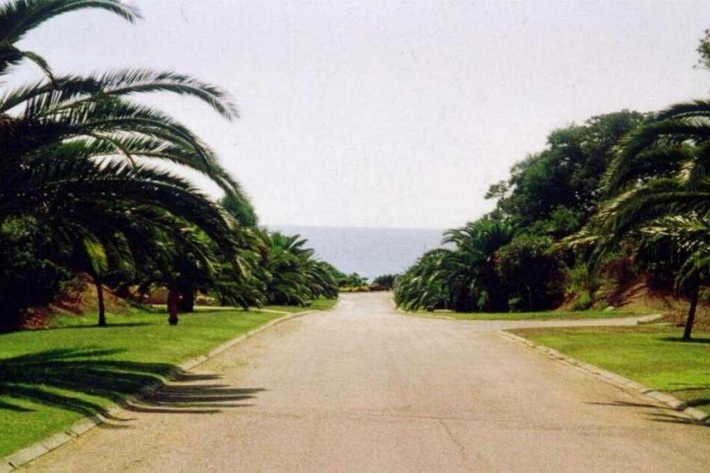 Depuis la grille d'entrée blanche, l'avenue principale est bordée de gazon, de larges palmiers et de lauriers roses.  Elle descend vers la mer en pente douce, sans route à traverser, sans aucun danger pour les enfants.
