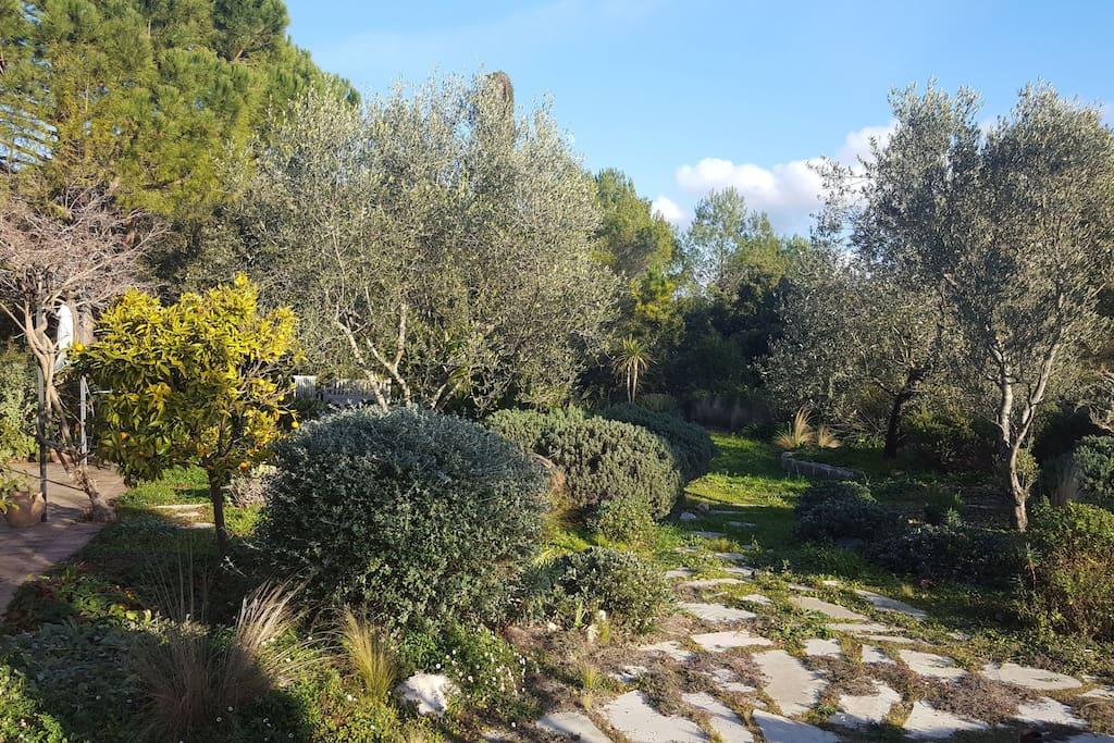 natural Mediterranean garden