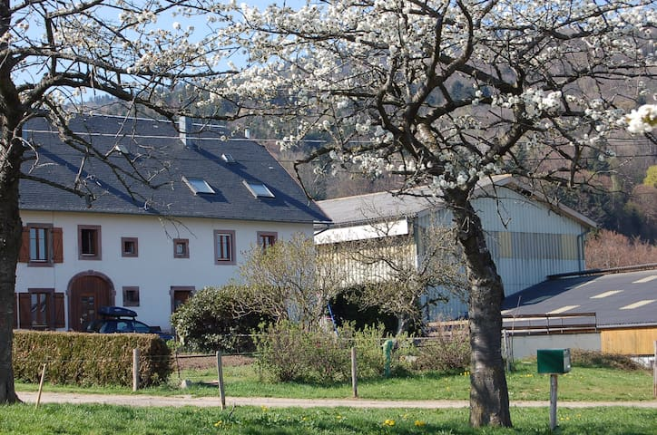 GITE RURAL- ALSACE-8 PERS-CALME - Orbey - Appartement