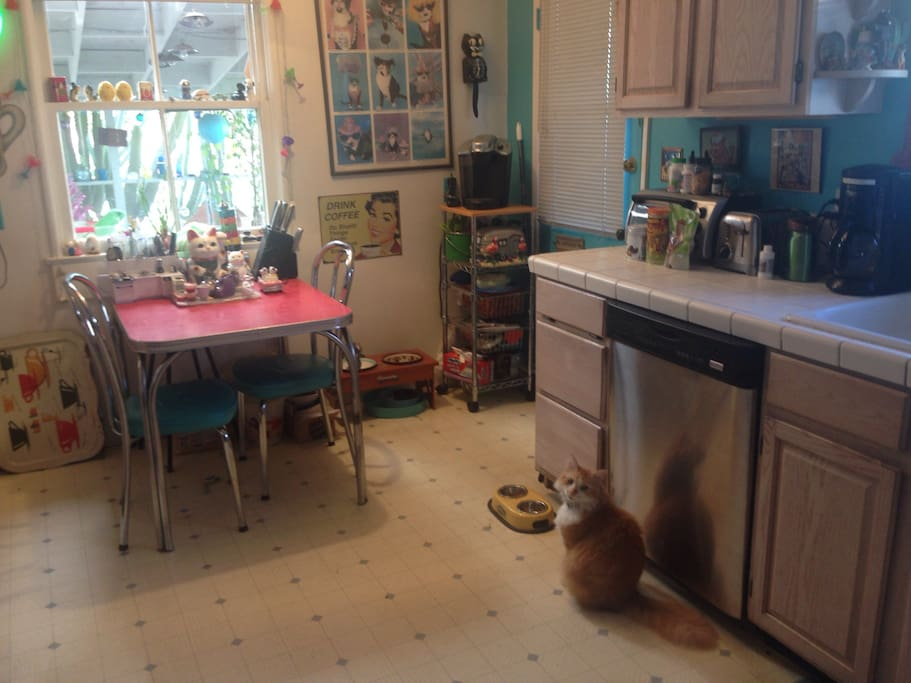 Retro style kitchen, turquoise walls, stainless appliances and cat!