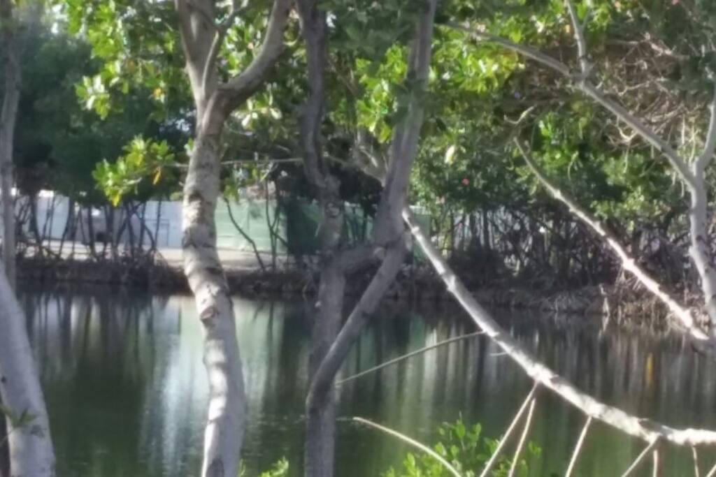 Mangroves and Manatee abound