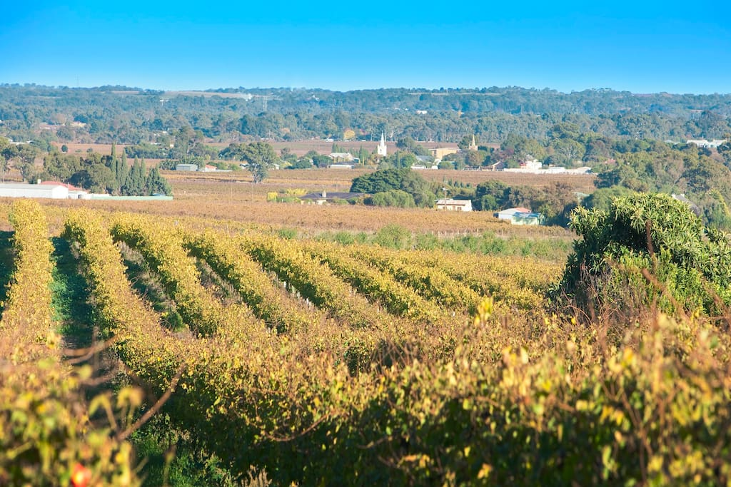Is this the best Barossa vineyard view - it's all yours!
