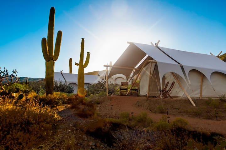 Under Canvas Tucson - Safari Tent