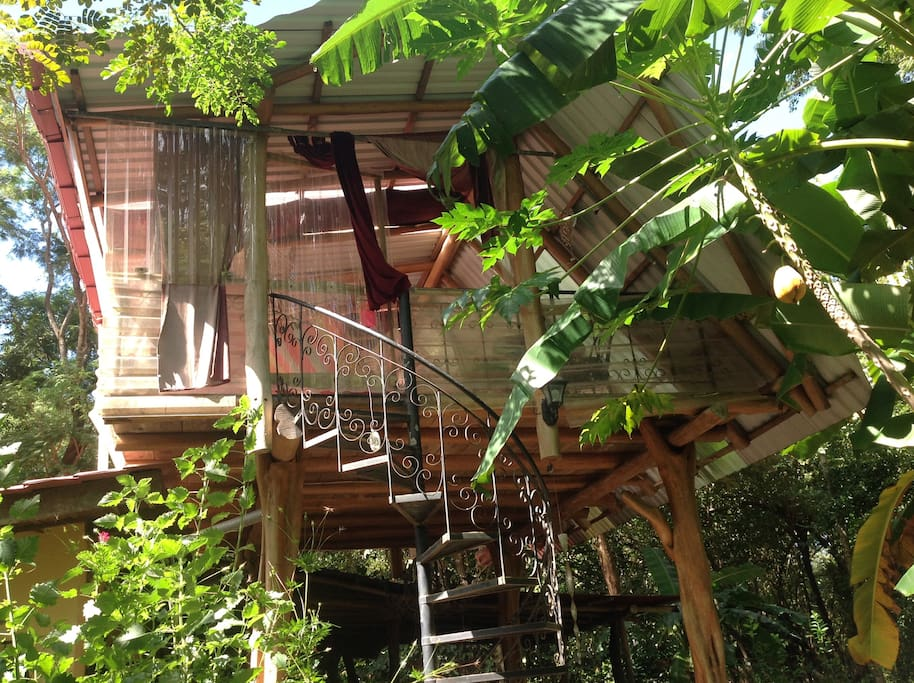 Nature dive house tree house like treehouses for rent in for Costa rica tree house rental