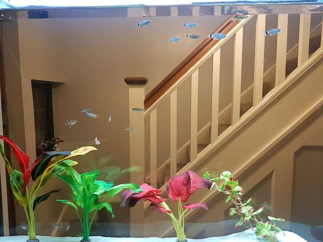 Feature Aquarian