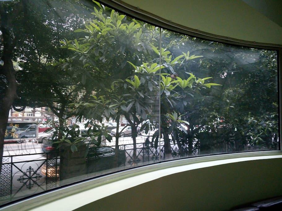 一整面的大窗子~阳光和生命力尽情吸纳~明媚的生命。
