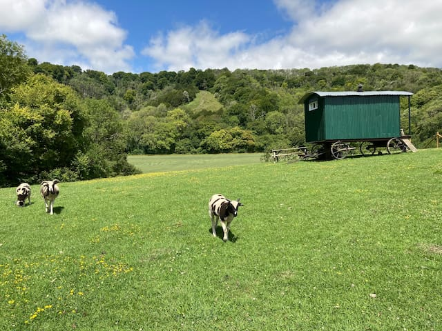 Private Glampsite, Shepherds Huts, Bell Tent, Pool