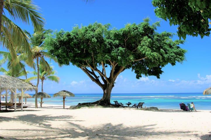 Studio ban mwen soley (20metres de la plage)