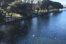 Oasi Entella River