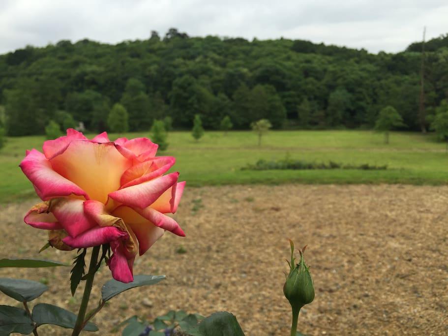La vallée de la Mayenne