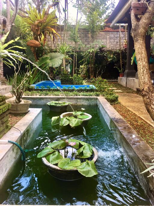 Jezírko, zahrada