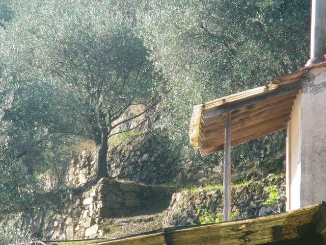 Lodge amongst the olives - Camporosso - Guest suite