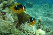 Diving at the Red Sea צלילה בים סוף