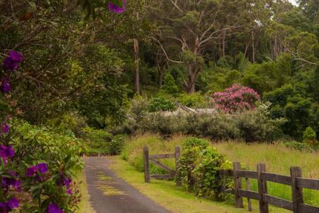 Ornithoptera Richmondia Sanctuary - Haus