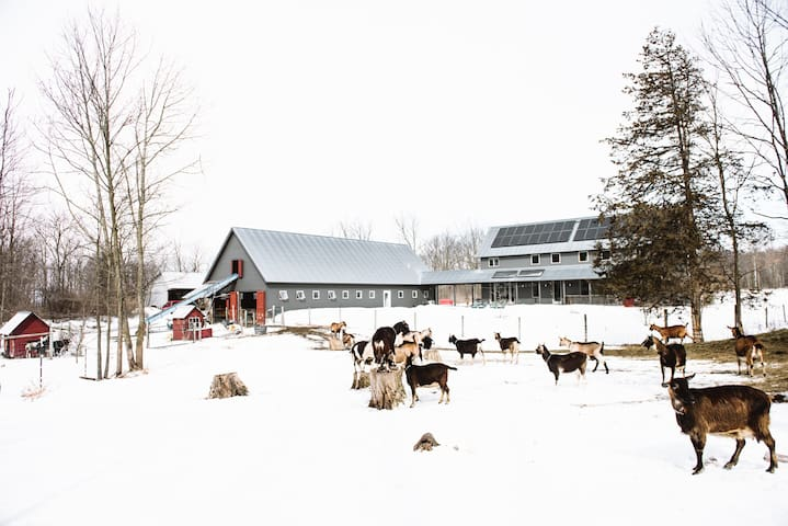 Twig Farm - Holiday on a working Goat Farm