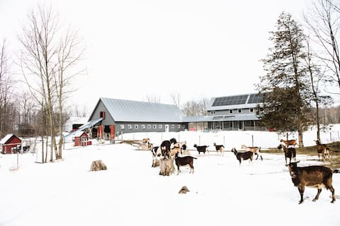 Twig Farm is a working goat dairy and farmstead cheese operation in Cornwall, Vermont.    Photo credit Mei Lin.