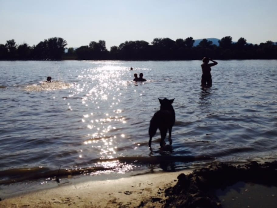 Family and dog friendly beach on the riverside