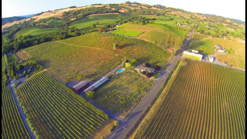 Chix Villa-  on our family century+   Zin vineyard